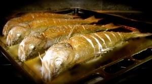 Žuvies šventė – vilkešeriai
