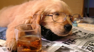 animals tea photography dogs glasses whiskey puppies sleeping drunk drinks newspapers scotch 1920_www.wall321.com_97