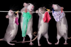 rats heaven